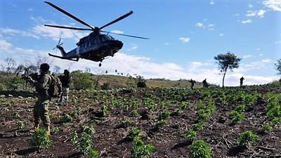 Fuerza antinarcótica descubre 270 ton. de marihuana, pero no hace reporte de detenidos