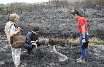 MADES insta a tomar conciencia sobre los efectos del fuego en todo el ecosistema