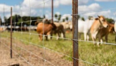 L'Acerie Paraguay dictará las Tendencias en Alambrados Rurales en charla online