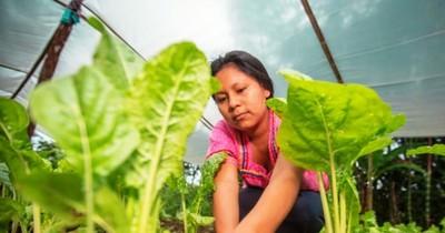 La Nación / Gobierno de Ecuador recibirá asistencia técnica paraguaya en proyectos de desarrollo agropecuario