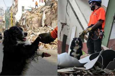 """""""Flash"""", el perro rescatista que detectó signos de vida bajo escombros, a un mes de la explosión en Beirut"""