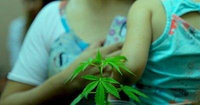 La Nación / Mamá Cultiva desmiente que no se cuente con semillas de cannabis para uso medicinal