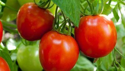 Comercializarán productos agrícolas a través de renovada plataforma móvil (una fusión de AgroAyuda y AgroÑemu)