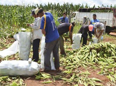 Lanzarán programa de apoyo a agricultores