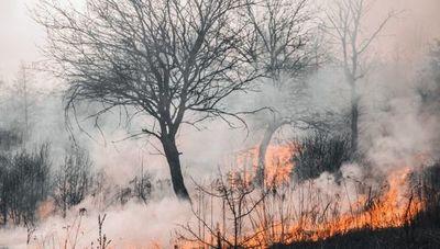 Daño ambiental le cuesta al país aproximadamente US$ 3.600 millones anuales