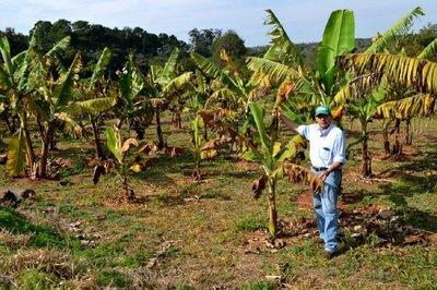 Productores frutihortícolas recibieron asistencia tras el azote de las heladas en Paraguarí