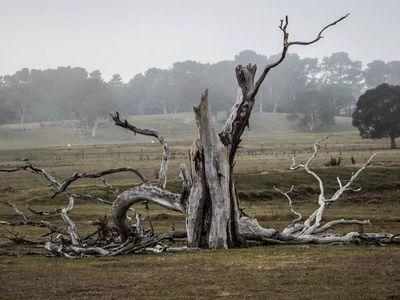 Los árboles que crecen rápido mueren antes, lo que agrava la crisis climática