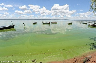 Nueva propuesta para tratar de recuperar el lago Ypacarai incluye drones acuáticos
