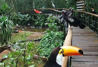 Parque de las Aves ofrece tarifa especial para moradores