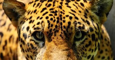 La Nación / El mundo perdió casi 70% de la fauna salvaje desde 1970, según WWF