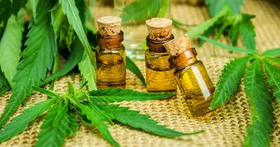 Ejecutivo vetó ley que despenaliza tenencia de cannabis para uso medicinal