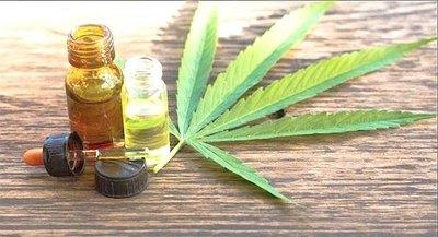 "Crónica / Se ""apagó"" el proyecto de marihuana medicinal"