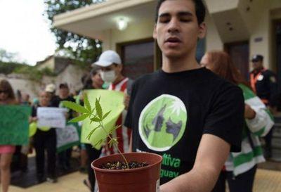 Mamá Cultiva rechaza veto a ley de cannabis medicinal