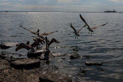 Un derrame de petróleo produce daño ambiental en el noroeste de Venezuela
