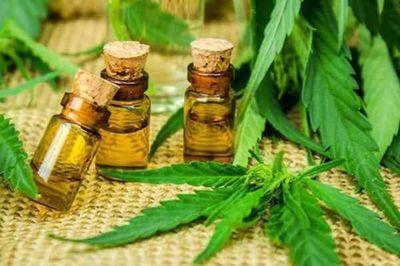 Lamentan que producción del cannabis medicinal solo favorezca a laboratorios