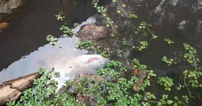 Mortandad de peces en arroyo