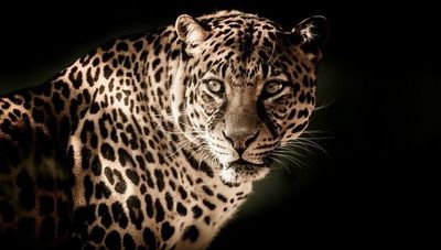 En 46 años la población animal mundial disminuyó en un 68%: ¿y en Latinoamérica?