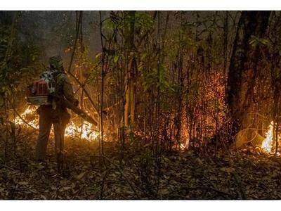 """Brasil declara """"estado de calamidad"""" en el Pantanal"""