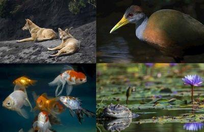 El tiempo se agota para evitar la sexta extinción masiva del planeta