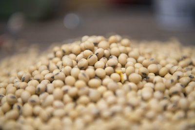 Los ingresos por la agropecuaria crecerán cerca del 14% este año, récord para Brasil