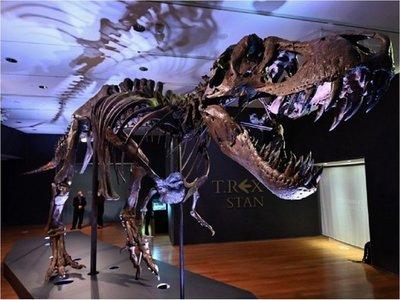 Stan, el dinosaurio más grande del mundo que será subastado