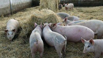 Paraguay suspende importaciones de productos de cerdo de Alemania