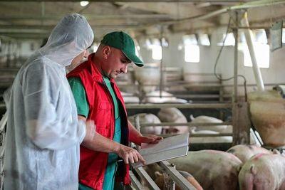 Paraguay suspende temporalmente importación de carne de cerdo desde Alemania