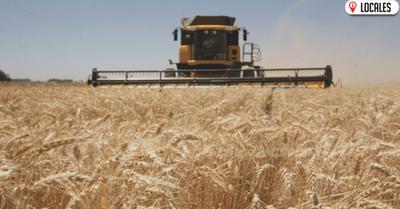 Instan al BNF a ofrecer créditos oportunos a productores de trigo afectados por heladas
