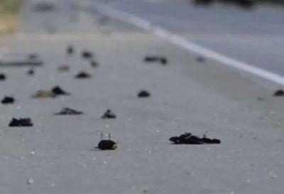 Investigan la muerte de miles de pájaros en Nuevo México