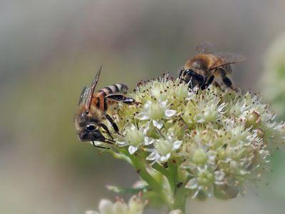 Teléfonos móviles podrían influir en mortalidad de los insectos