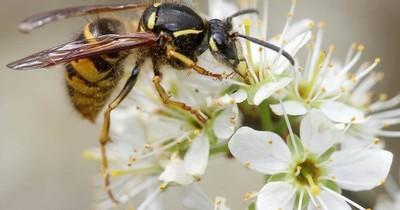 La Nación / Teléfonos móviles podrían influir en mortalidad de los insectos