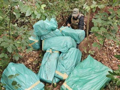 Encuentran casi 350 kilos de marihuana prensada dentro de una fosa en Yby Yaú