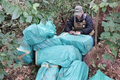 Fiscalía incauta más de 300 kilos de marihuana