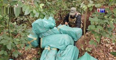 Senad incauta más de 300 kilos de marihuana en Yby Yaú