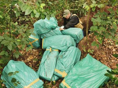 Incautan más de 300 kilos de marihuana oculta en una fosa