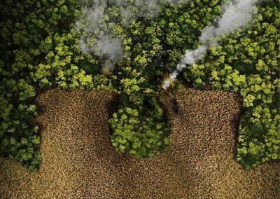 Lanzan campaña para impulsar extensión de la ley de deforestación cero