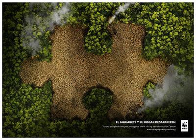Deforestación: Paraguay perdió más del 85% de sus bosques entre 1970 y 2005