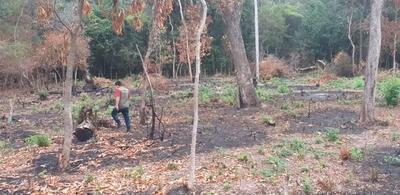 Intervienen propiedad por talar de árboles nativos
