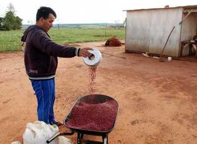 Familias que fueron trasladadas de Guahory logran primeras cosechas – Prensa 5