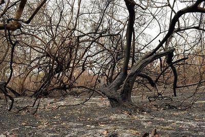 Afirman que situación del pantanal es preocupante por la combinación de incendios y sequía