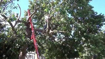 Hombre muere tras caer de un árbol que estaba podando