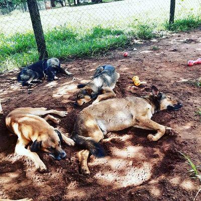 Buscan con urgencia nuevo hogar para perros con enfermedades crónicas