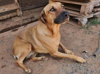 Buscan nuevo hogar para canes con enfermedades crónicas