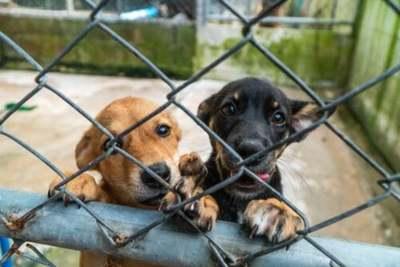 Refugio de perros lanza campaña de adopciones temporales durante la pandemia