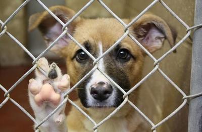 """""""Perroomies"""": refugio de perros busca dar un hogar a peluditos en tiempos de pandemia"""