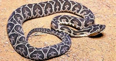 La Nación / Mordeduras de serpiente: reportaron 96 casos este año