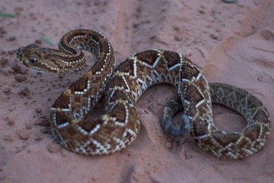 ¿Qué hacer ante la mordedura de una serpiente?