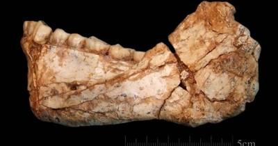 La Nación / El homo sapiens envejece 100.000 años