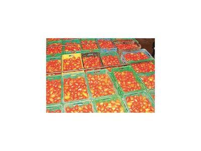 Los precios del tomate local tienden a normalizarse por la buena producción
