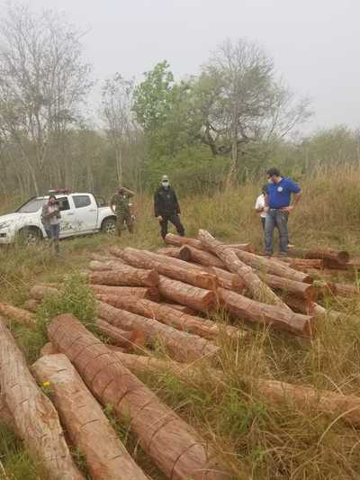 Fiscal investiga presunta tala ilegal de árboles en Concepción